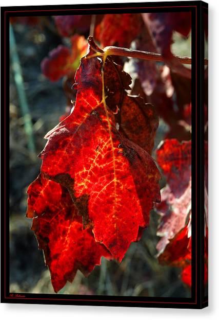 Vine Leaf At Fall Canvas Print