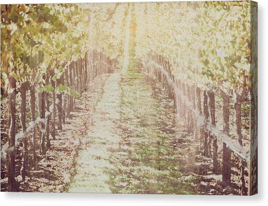 Vineyard In Autumn With Vintage Film Style Filter Canvas Print