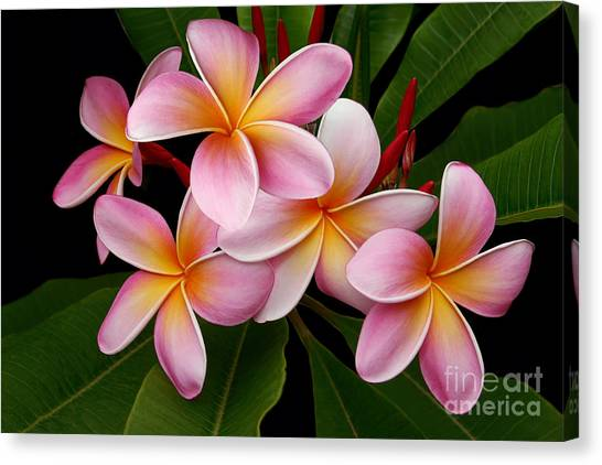 Wailua Sweet Love Canvas Print