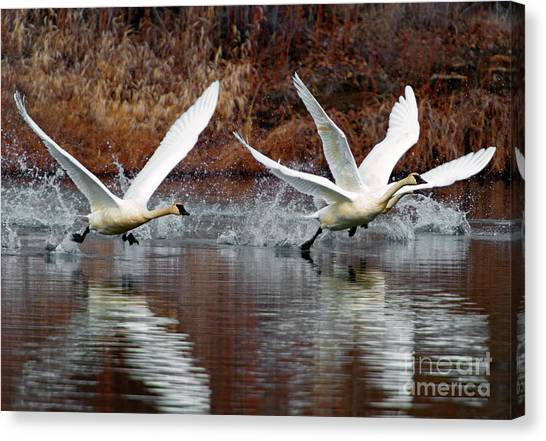 Tundras Canvas Print - Walking On Water by Mike Dawson