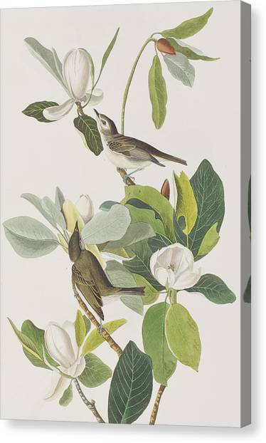 Flycatchers Canvas Print - Warbling Flycatcher by John James Audubon