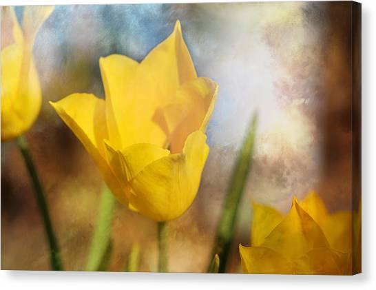 Water Lily Tulip Flower Canvas Print