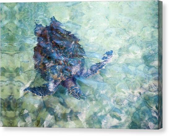 Canvas Print featuring the photograph Watercolor Turtle by Denise Bird