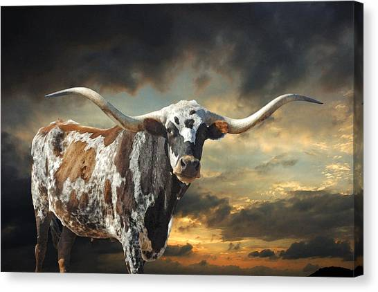 Longhorn Canvas Print - West Of El Segundo by Robert Anschutz
