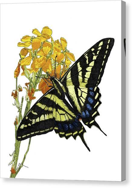 Western Tiger Swallowtail On A Western Wallflower Canvas Print