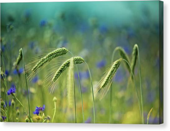 Corn Canvas Print - Wheat And Corn Flowers by Nailia Schwarz
