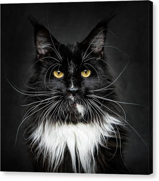 Canvas Print featuring the photograph Whiskers  by Robert Sijka