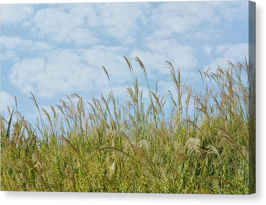 Whispers Of Summer Canvas Print