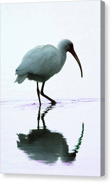 White Ibis Canvas Print by Jerry Weinstein