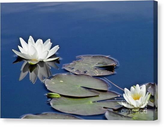 White Water Lily Canvas Print - White Water Lily by Heiko Koehrer-Wagner