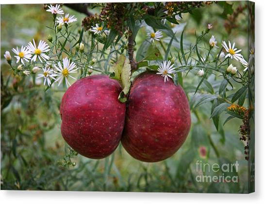Wild Orchards Canvas Print - Wild Apples by John Stephens