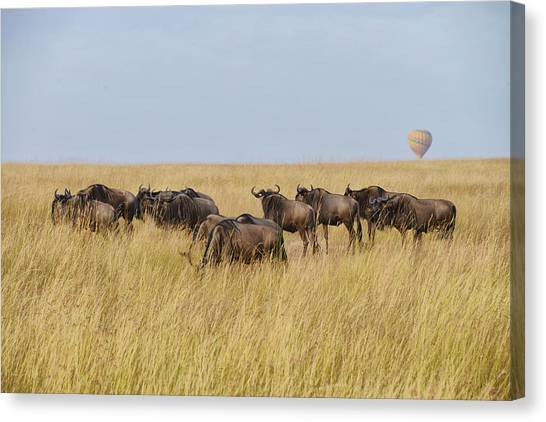 Wild Beasts Canvas Print