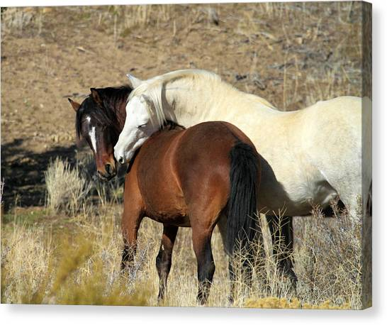 Wild Mustang Horses Canvas Print
