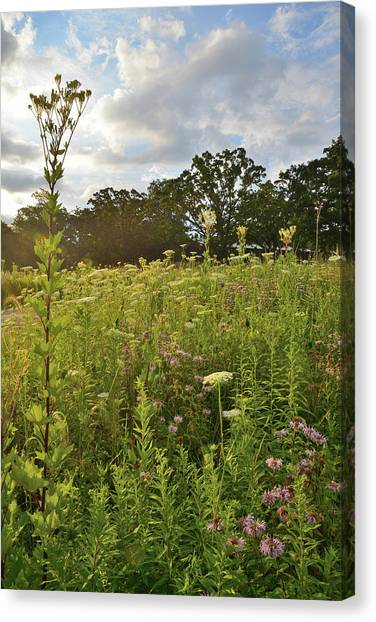 Prairie Sunrises Canvas Print - Wildflower Garden In Glacial Park by Ray Mathis