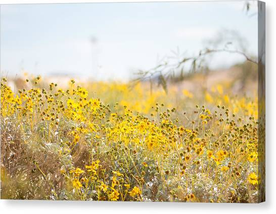 Mojave Desert Canvas Print - Wildflower by Hyuntae Kim
