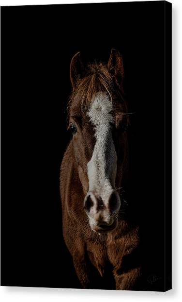 Equine Canvas Print - Window To The Soul by Paul Neville