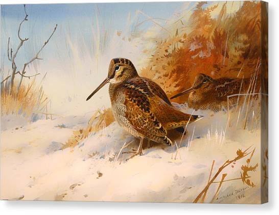 Woodcock Canvas Print - Winter Woodcock by Mountain Dreams