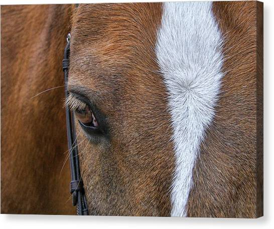 Harry The Wonder Pony Canvas Print by JAMART Photography