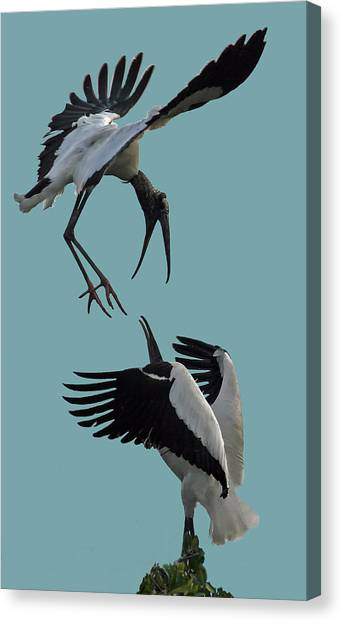Wood Stork Pair Canvas Print