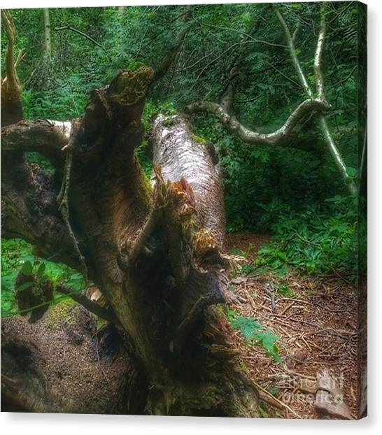Forests Canvas Print - #wood #tree #forest #nature by YoursByShores Isabella Shores