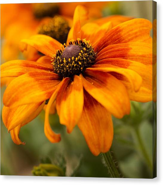 Canvas Print featuring the photograph Yellow And Orange Petals by Mary Jo Allen
