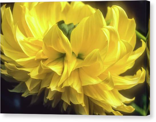 Canvas Print featuring the photograph Yellow Dahlia by John Brink