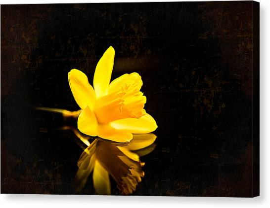 Yellow Dreams Canvas Print