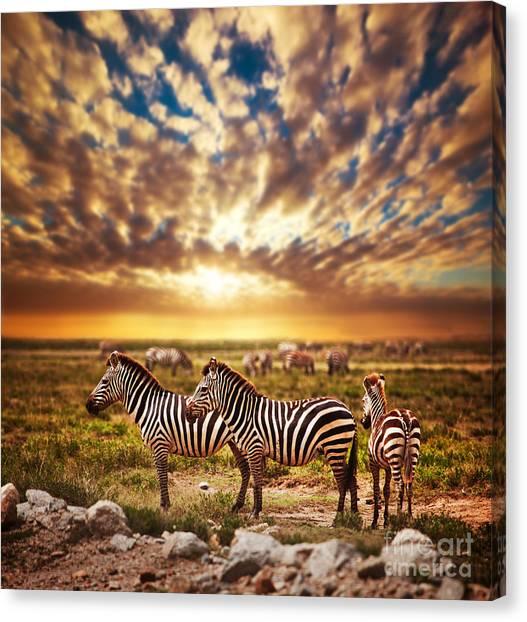 Zebras Herd On African Savanna At Sunset. Canvas Print