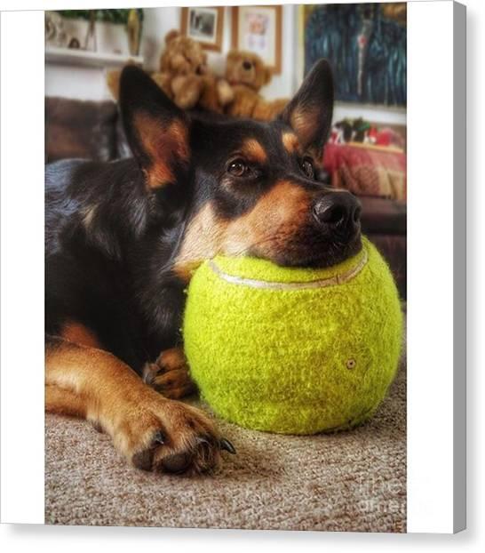 Gsd Canvas Print - #dogs #petstagram #gsd #germanshepherd by YoursByShores Isabella Shores