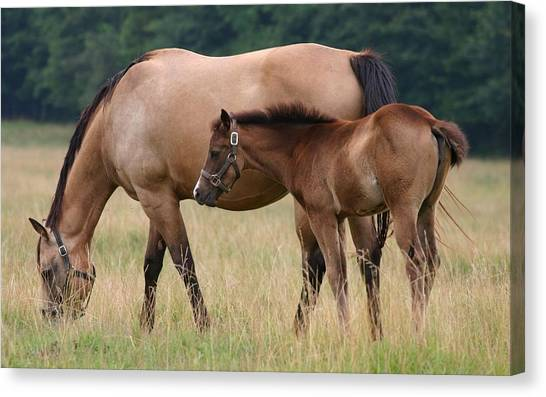 Thoroughbreds Canvas Print - Horse by Jackie Russo