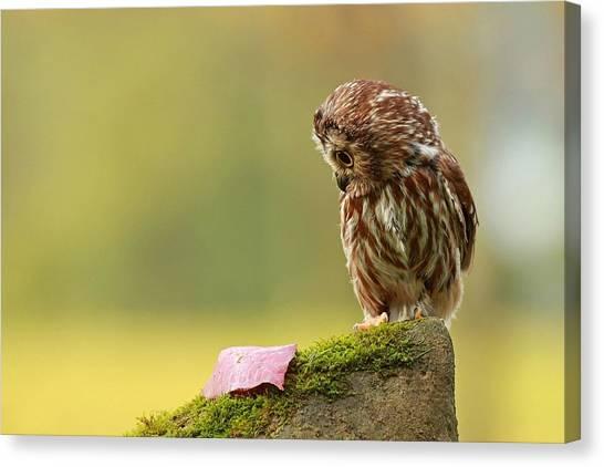 Starlings Canvas Print - Owl by Mariel Mcmeeking
