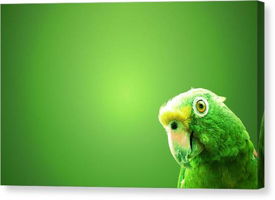 Macaws Canvas Print - Parrot by Mariel Mcmeeking