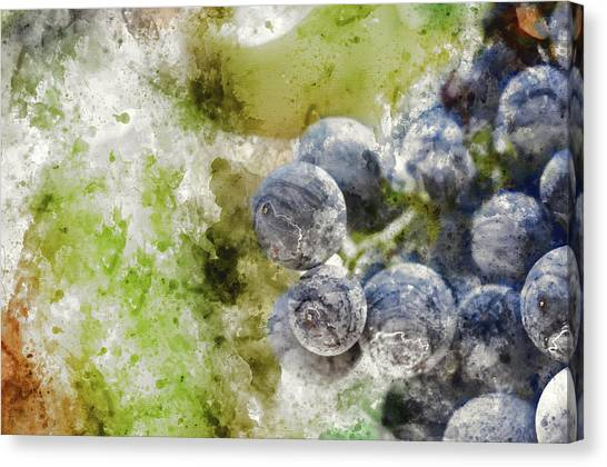 Grapes Canvas Print - Red Grapes On The Vine by Brandon Bourdages