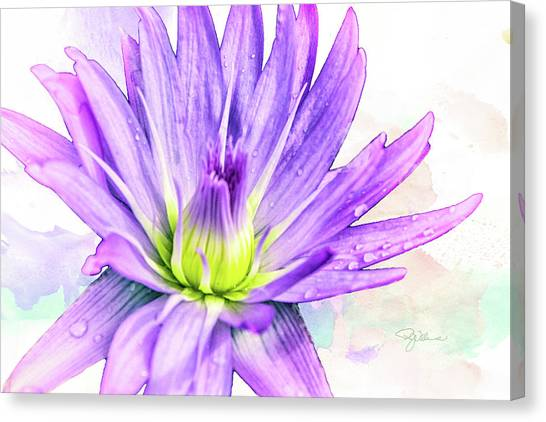 10889 Purple Lily Canvas Print