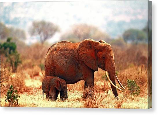 Ivory Canvas Print - Elephant by Maye Loeser