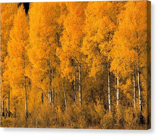 Old Age Canvas Print - Fall by Maye Loeser