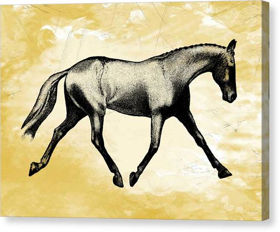Lengthen Trot Stencil Canvas Print by JAMART Photography