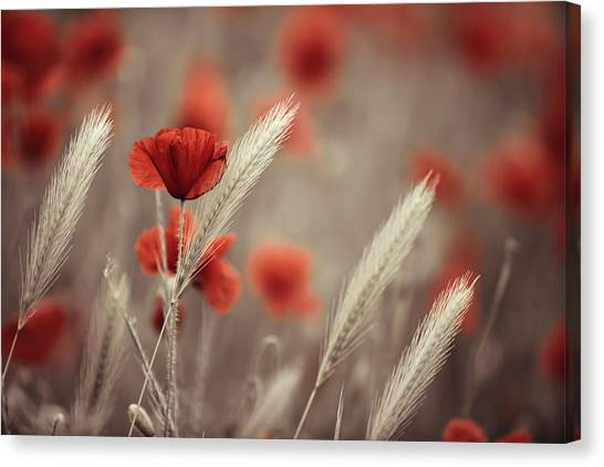 Corn Canvas Print - Summer Poppy Meadow by Nailia Schwarz