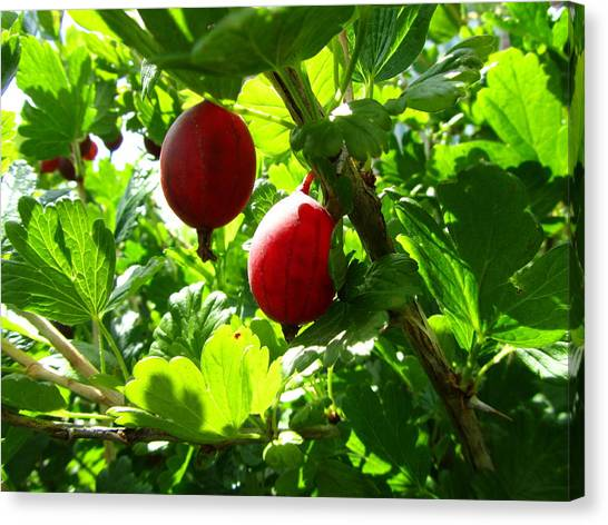 Grove Canvas Print - Berry by Jackie Russo