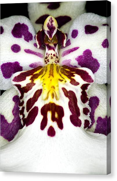 Exotic Orchid Flower Canvas Print