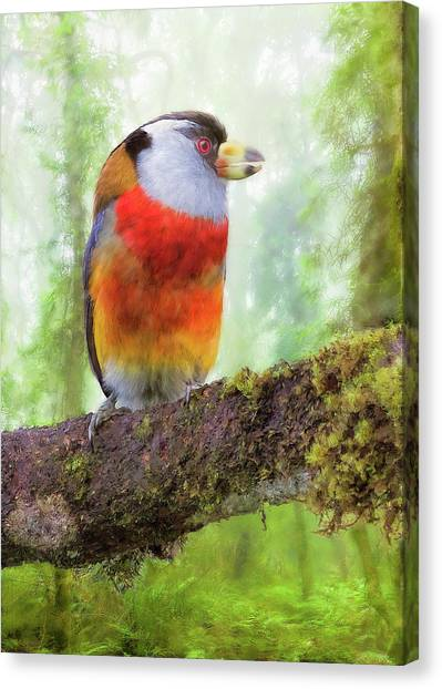 Toucan Barbet Canvas Print