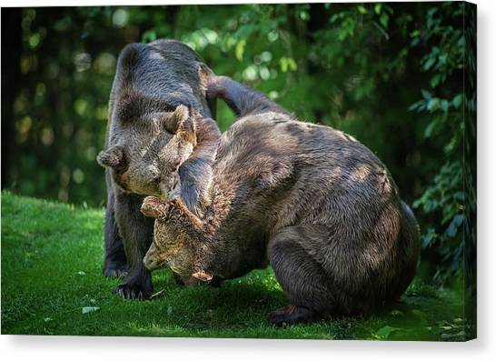 Triceratops Canvas Print - Bear by Super Lovely