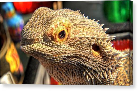 Pheasants Canvas Print - Lizard by Mariel Mcmeeking
