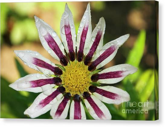 Nice Flower Canvas Print
