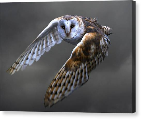 Woodpeckers Canvas Print - Owl by Jackie Russo