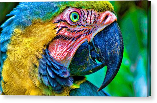 Peacocks Canvas Print - Parrot by Mariel Mcmeeking
