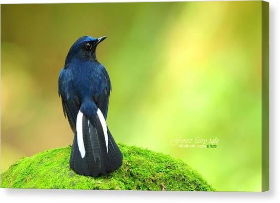 Starlings Canvas Print - Bird by Maye Loeser