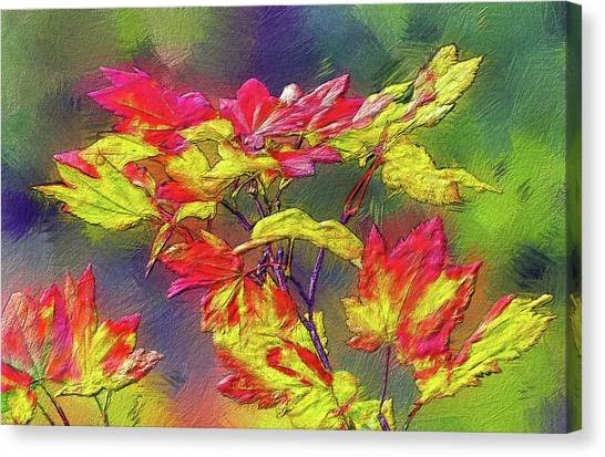 Vine Maple Color Canvas Print