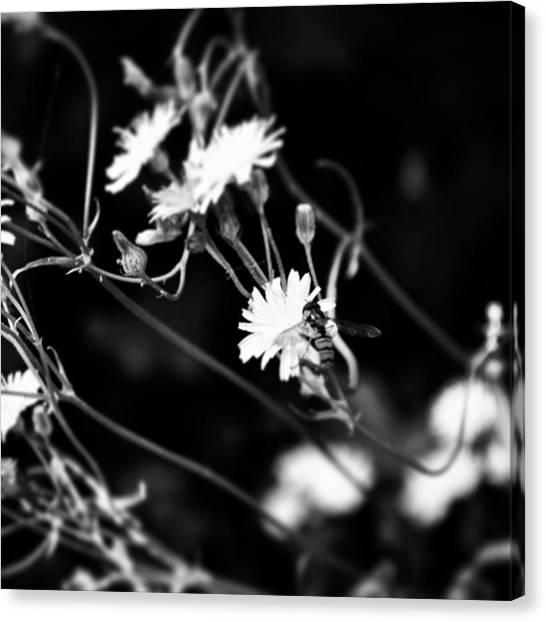 Botanical Canvas Print - Instagram Photo by Jason Michael Roust