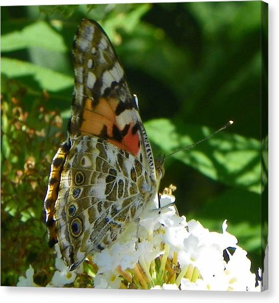 Butterfly Canvas Print by Gerald Kloss